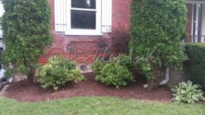 Front garden pruned