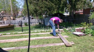 Building the frame for raised bed gardens - super simple. 2x10 boards screwed together at the corners. www.picklesINK.com