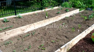 Raised bed gardening - so simple! www.picklesINK.com